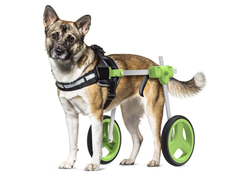 Wheelchair concept for dogs